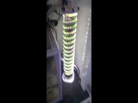Macro algae reactor 1 month later