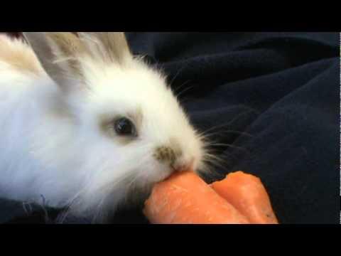 Conejo Comiendo Zanahoria Youtube Ilustración de dibujos animados de conejo con zanahoria. conejo comiendo zanahoria youtube
