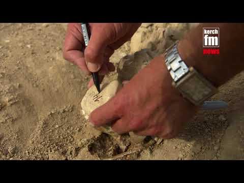 видео: в районе стройки жд моста нашли скелет древнего кита
