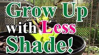 6 Ez Tips To Minimize Shade When Growing Vertically In A Small Garden