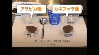 コーヒーの品質鑑定!「カップテスト」を体験してみた thumbnail
