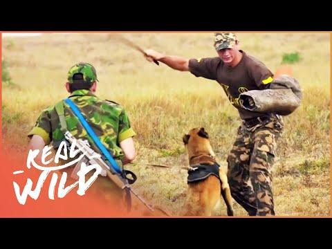 Training Anti-Poaching Dogs In The Shamwari Reserve   Shamwari Untamed S1 EP7   Real Wild