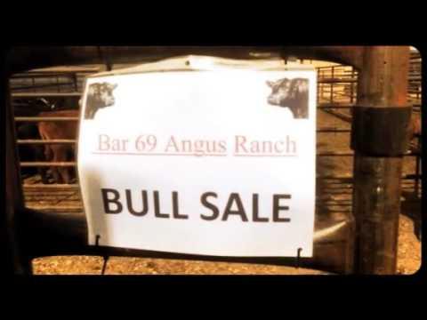 Angus Bull Sale 2016 - Bar 69 Ranch - Belle Fourche - SD