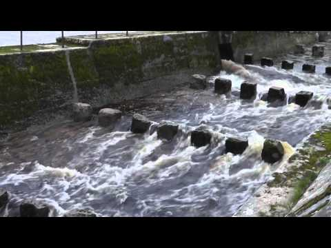 Fish Running The Fish Pass At Loch More - View In HD