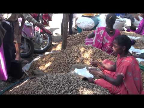 ಕಡ್ಲೆಕಾಯಿ ಪರಿಷೆ  (PEANUT FAIR) IN BANGALORE