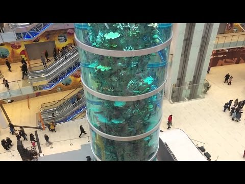Где самый высокий цилиндрический аквариум? В Москве, в ТЦ Авиапарк на Ходынском поле