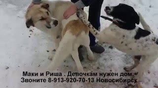 Собаки ищут дом Приют Дари добро Новосибирск animal shelter asking for help
