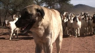 Dogs ease Namibia
