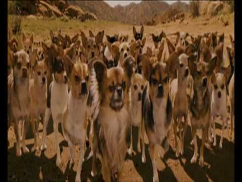 Beverly Hills Chihuahua - Chihuahua scene (NL 2008)