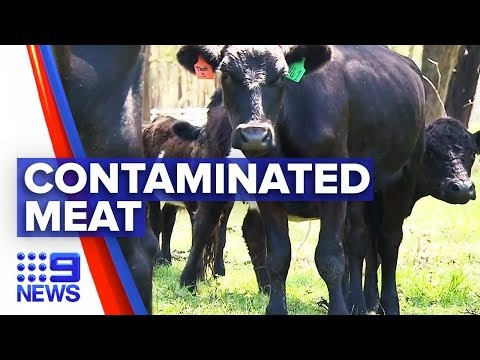 Beef Cattle Contaminated With Toxic Cancer Chemicals | Nine News Australia