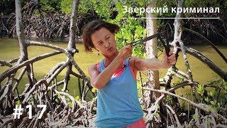 Зверский криминал: медоеды-громилы, павианы-грабители и крокодилы-убийцы // Все как у зверей #17(