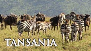 Tansania: Serengeti, Sansibar und Kilimanjaro