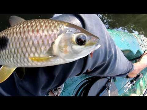 MILHO NO ANZOL E PIAU NA LINHA!!! Pescaria...