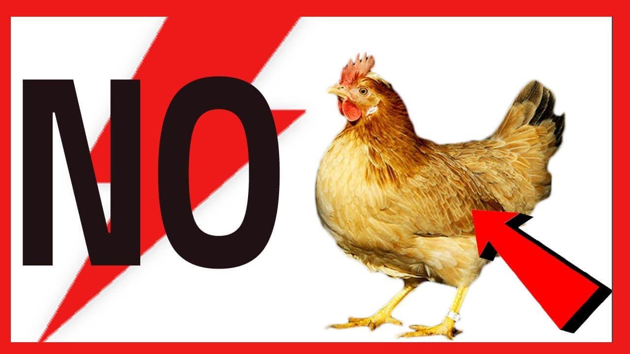 como matar los piojos de las gallinas