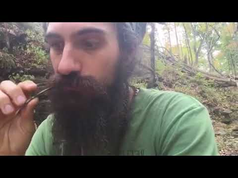 Foragers Broadcast Ep. 51 - The Magic of Ferns, and Herbal Discussion on Injuries