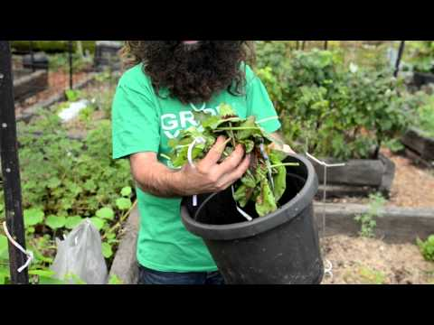 The first steps to composting with Costa Georgiadis