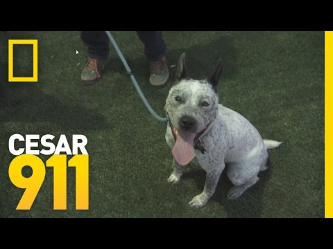 Deleted Scene: Vada at Cesar's Dog Park | Cesar 911