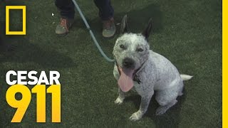 Deleted Scene: Vada at Cesar's Dog Park | Cesar 911