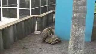 Turtle Lovin