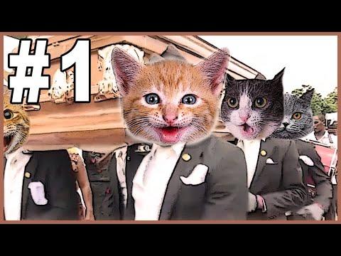 Dancing Funeral Coffin Meme - CATS VERSION