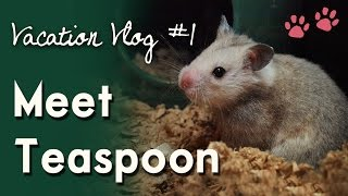 Meet Teaspoon! (Taxonomist's Hamster) VACATION VLOG #1 Thumbnail