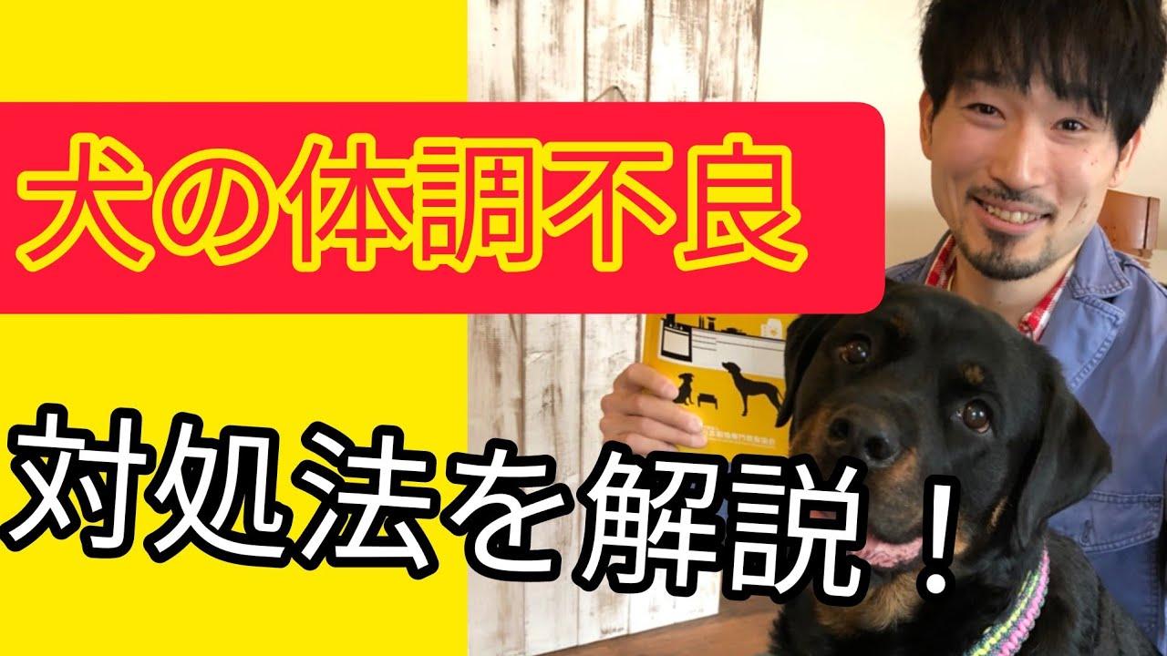 犬が病気や体調不良になったときの対処法【動物病院や獣医を動かせ!】
