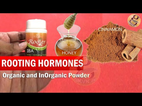 What is Rooting Hormone for plants | Organic Rooting Hormones and Synthetic Indole Butyric Acid