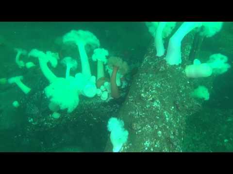 04 Jan 2013 - Maury Island Barges - Boulder reef part 2