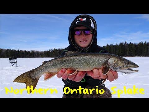 Northern Ontario Splake Fishing