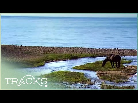 Legends of the Hot Lake (Untouched Kyrgyzstan - Full Documentary) | TRACKS