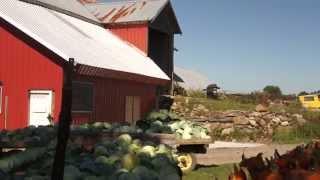 Roadside Vegetable Farm, Upstate New York, Waterville, Late September
