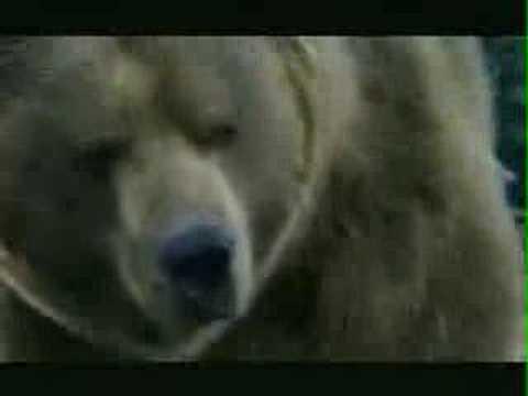 Bud Light Bear Chase Super Bowl XL Commercial