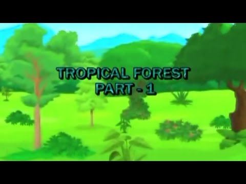 Tropical Forest Learn Biomes Episode 01