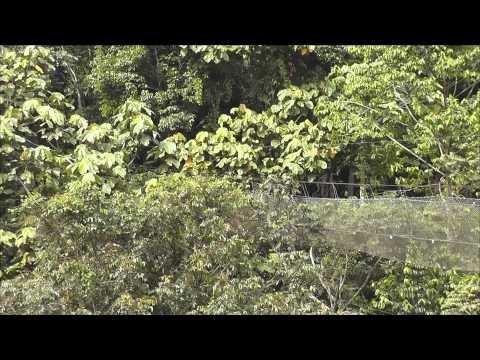 The Lion Group (BMC) & Ex-Staff at Dusun Eco Resort Video 15&16/6/13 (Part 1)