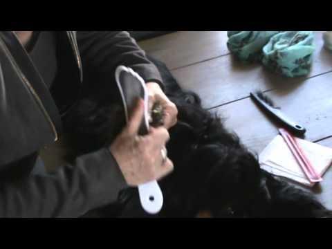 Filing nails at a dog