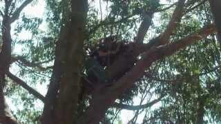 Tutorial para colgar una tela en un árbol Parte 1
