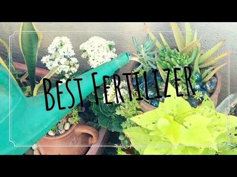 How To Fertilize Your Plants Using Fish Fertilizer