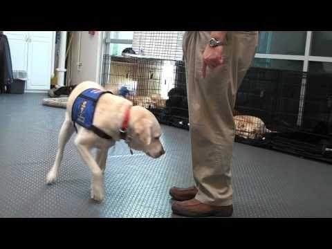 dogs-for-diabetics