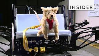 How Pet Products are Tested for Safety