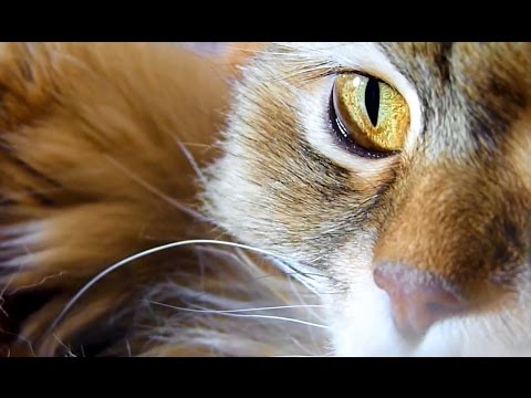 Cats in the cradle | Cuddling  Kittens Videos Compilation
