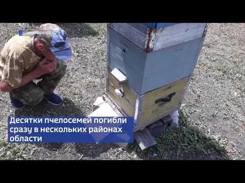 Массовая гибель пчел зарегистрирована в Липецкой области