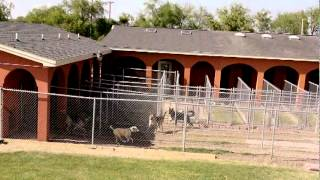 Paws And Claws Pet Resort In Edinburg, Texas