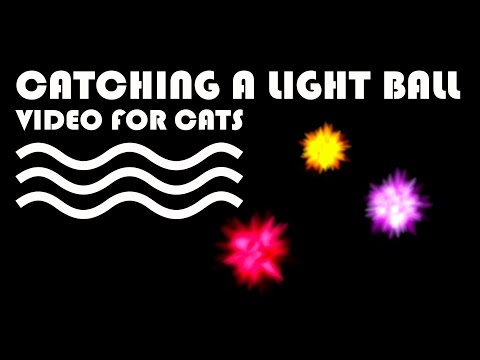 ENTERTAINMENT VIDEO FOR CATS. Cat Game on Screen. Catching a Light Ball.