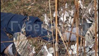 Мужчина и кошка погибли при падении с высоты в Хабаровске.MestoproTV