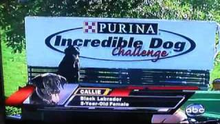 Incredible Dog Challenge 2009- Callie