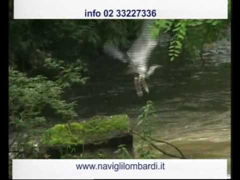 Navigli Lombardi - Itineario dei Fontanili e degli Aironi di Milano