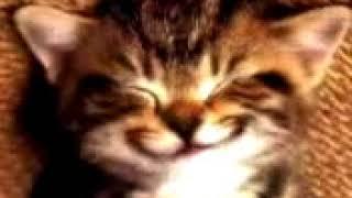 cat happy birthday wishes