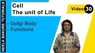 Cell - The Unit of Life - Golgi Body - Functions