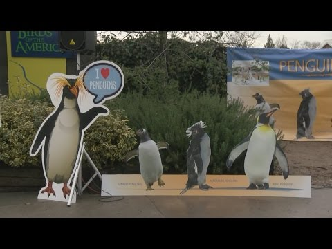 City breaks ground on 'Penguin Chill' exhibit at Albuquerque Zoo