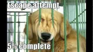 Funniest Animal Pictures Ever